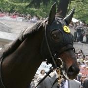 とある馬オタクの競馬blog