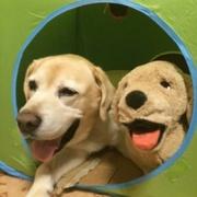 ユーカリの樹〜老犬ラブ・私立受験・主婦のブログ