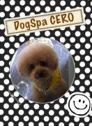 DogSpa CEROのブログ