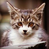 猫と写真と政治の日々