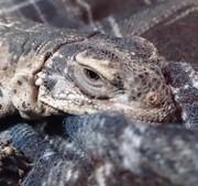 爬虫類と日常のお話