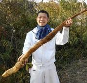 山豊農園  〜サンホーファームの野菜生産日記〜