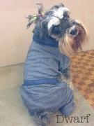 犬服ハンドメイドDwarfブログ