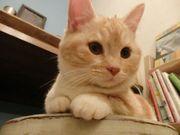 猫カフェ ねこの靴下