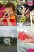 もぎたての美味しい果物を食べよう!!