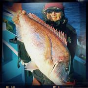 剣崎沖でコマセ真鯛釣り