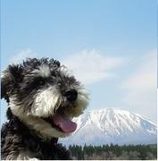 わんことおんも −犬連れカリフォルニア生活−