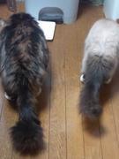 仕事・日常で感じた事・猫のブログ
