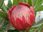 RYU PLANTS NETWORK