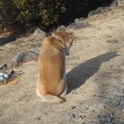 保護犬預かりボランティア 新米日記