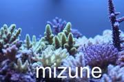 ZEOvit System  水槽で煌くサンゴたち