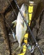 丸の魚介類捕獲記録