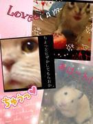 シマリス・キンクマ・スコ(猫)ちょぴ家のブログ