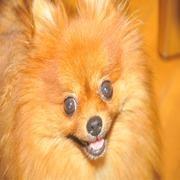 リンパ腫寛解後の様子と、犬、エビのお話