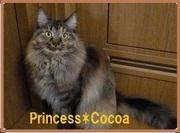 Princess*Cocoa  デコパージュ&ポーセラーツサロン
