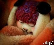 眠れる羊毛ウサギの日記