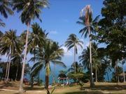 サムイ島のワンダフルデイズ