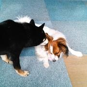 犬と公と中の人