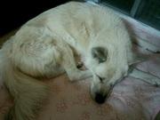 介護生活一歩手前15歳高齢犬との毎日