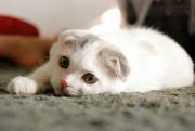 元動物嫌いな猫アレルギー女ともちこの生活。