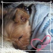Angel dog & Love cat  晴れ時々…保護