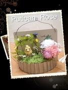 Putican  Rose 癒される空間 暮らしの中での楽しさを