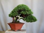 雨宮園〜盆栽・山野草・陶芸〜趣味が仕事でも・・・。
