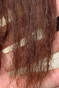 髪の傷みを考える美容室(大阪府守口市大日町)