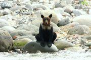 世界自然遺産の宿 しれとこ村ブログ