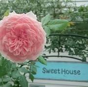 Sweet House*バラとカフェとハンドメイド♪