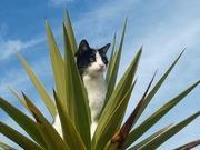 ニュージーランドで「猫」やってます。