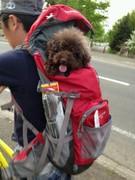 自転車はいいね〜ラ−メンもねっ!!