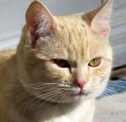 ネコの生活風景 - LIFE WITH CATS