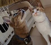 猫とひなたぼっこ