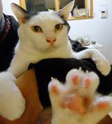 乳がん,memo - 笑う猫とその他もろもろ-
