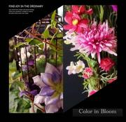 Color in Bloom カラーインブルーム