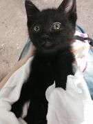 黒い子猫のはなし