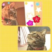 猫3匹と大人4人の暮らし