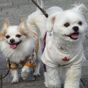 *marche* 〜秋田市内の犬服ハンドメイドショップ