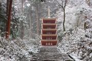 yukio photo gallery  うさおの足跡