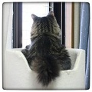 エイベックエコ 猫窓ブログ Ver1.1