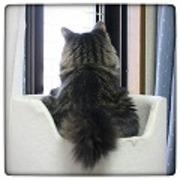 エイベックエコ猫窓ショップさんのプロフィール