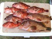 釣りの情報ならこのサイト!!福岡在住・釣り師のブログ