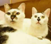 大阪♪堺東の猫カフェ「ゆる猫」