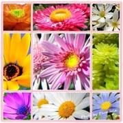 別館 Flower Blog