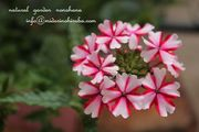 gardenshop nonohana blog