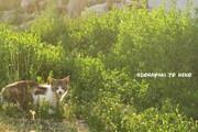 ドラヤキとネコ