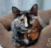 サビ猫このはのブログ