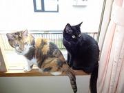 三毛猫ちびと黒猫にゃーにゃ