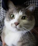 招き猫の右手さんのプロフィール